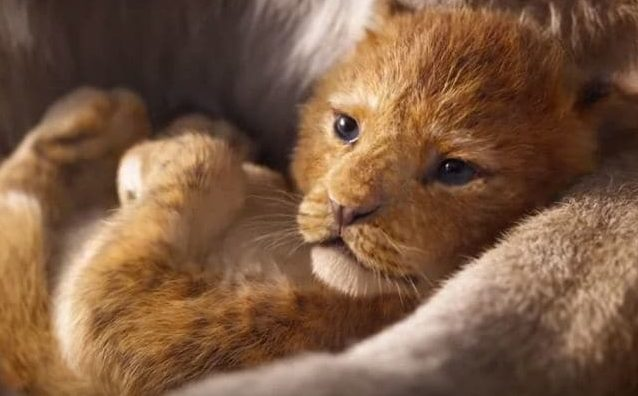 Il re leone disney diventa film live action ma quando