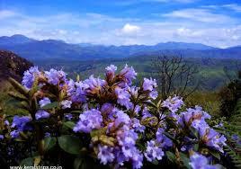 images fiore blu