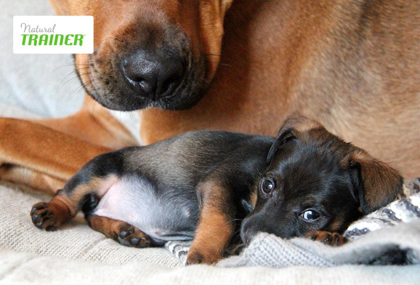 Peso ed età: due fattori fondamentali nella scelta della giusta alimentazione per cani