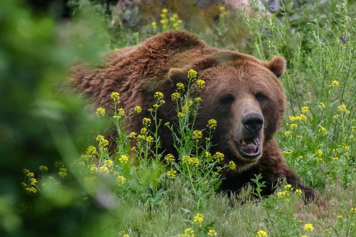 Mamma e figlia neonata uccise da un orso Grizzly