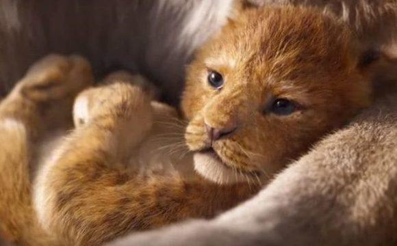 Il Re Leone Disney diventa film live-action: ma quando uscirà al cinema ?