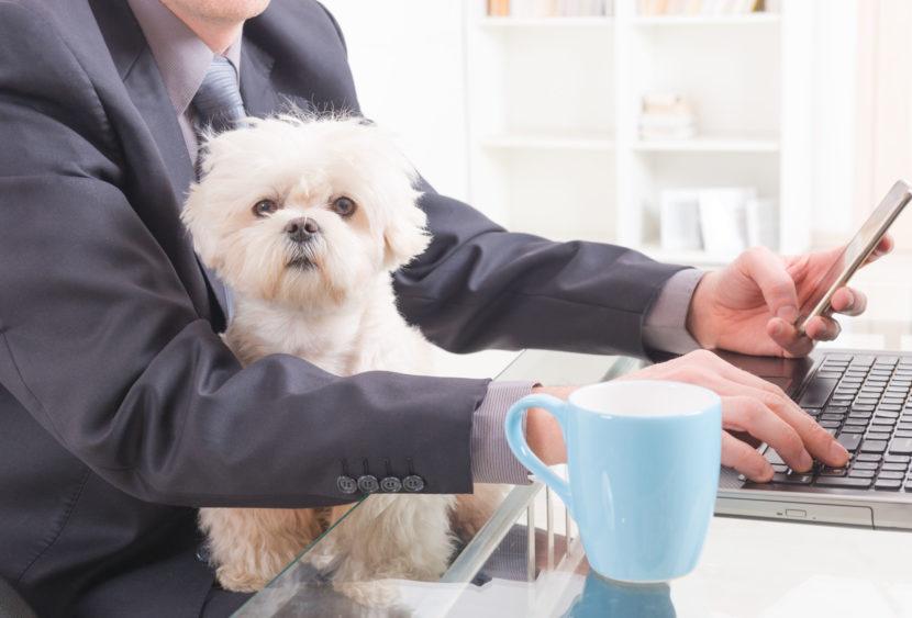 A Milano in Unicredit cani e padroni vanno insieme in ufficio