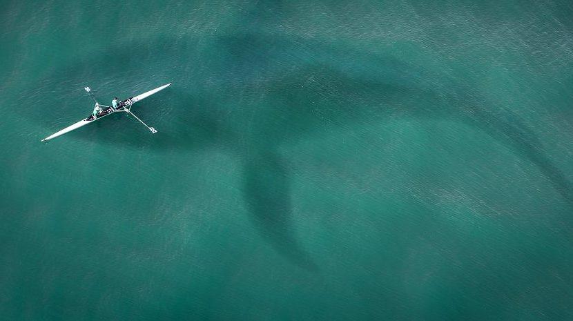 Scoperto lo squalo più vecchio al mondo: ha 400 anni