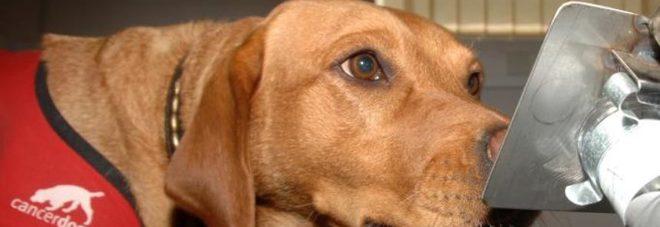 I cani fiutano il cancro nei prelievi del sangue: lo afferma uno studio americano