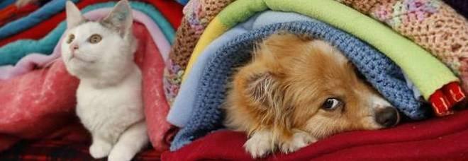M5s: proposta una legge che vieta di mangiare cani e gatti