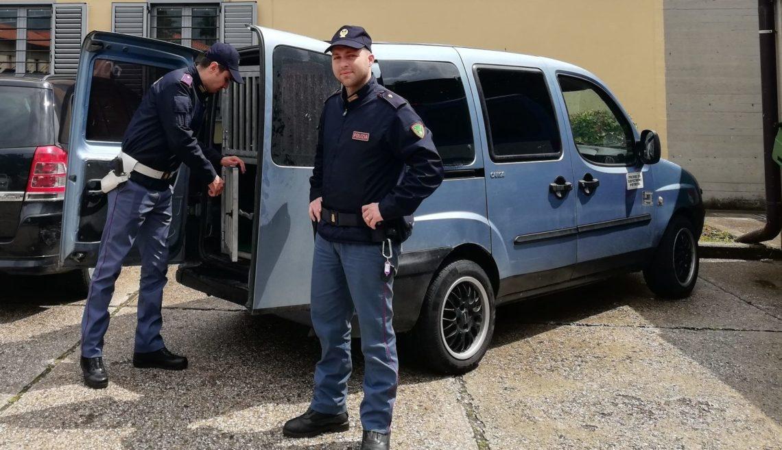 Polizia di Stato: eseguito un sequestro di cani nei pressi di Fernetti