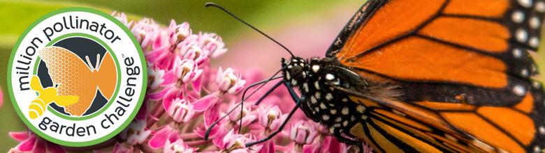 """Ecco la """"Million Pollinator Garden Challenge"""", l'iniziativa per salvare gli insetti impollinatori"""
