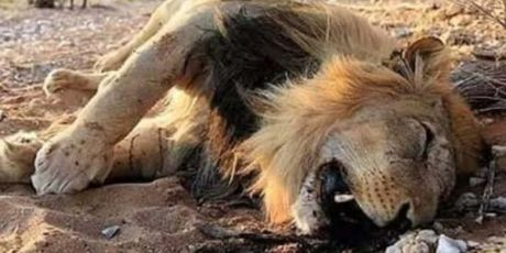 """The Lion's Share: le grandi società unite per salvare """"Il Cerchio della Vita"""""""