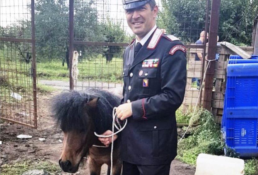 Pony salvato dalla macellazione clandestina. Scoperto e sequestrato anche un allevamento abusivo di suini: tre le persone denunciate