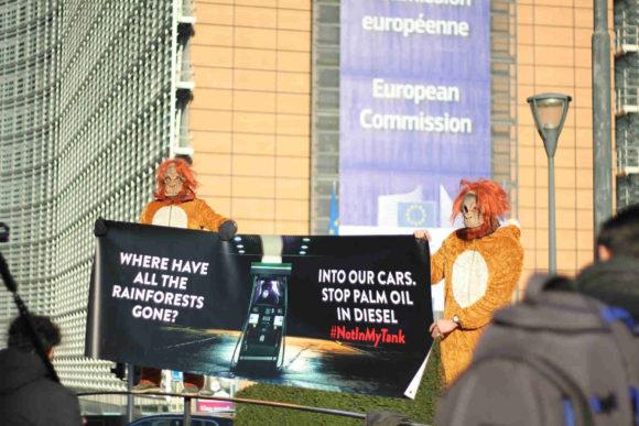 Olio di palma nel biodiesel : le proteste di Legambiente