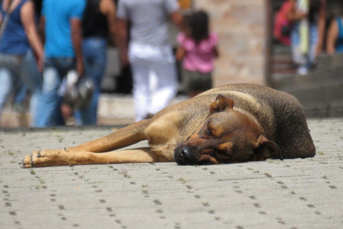 Sgombero locale Astor: trovati 10 tra cui donne e bambini più un cane in condizioni pietose