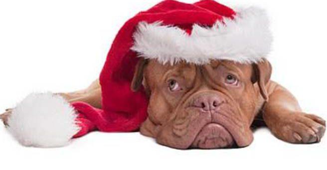 Come sopportare gioie e dolori della vita anche a Natale?