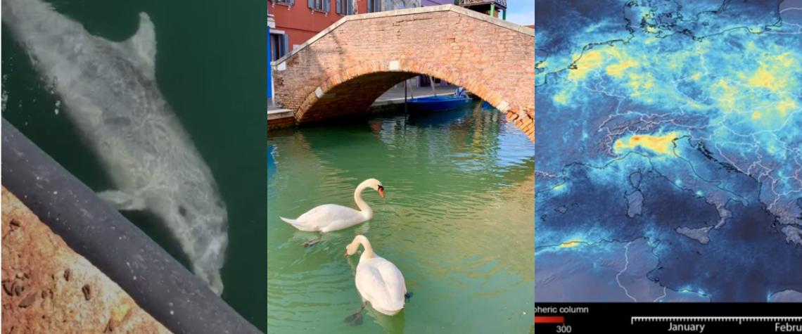 Coronavirus, da Cagliari a Venezia la natura si riprende l'Italia