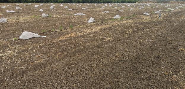 Tremila piantine di agrumi danneggiate a Mineo