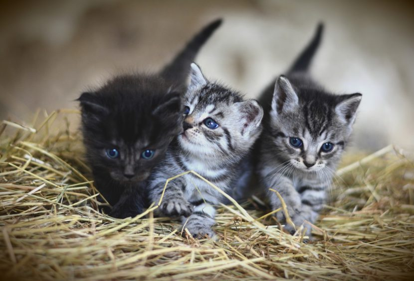 Coppia aggredita, la loro colpa era curare i gatti