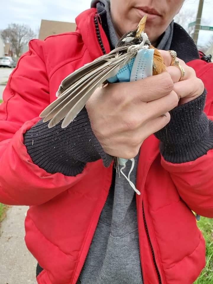 L'uccellino strangolato dalla mascherina, simbolo della lotta all'inquinamento