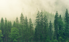 Europa, la presenza di alberi è essenziale per combattere il cambiamento climatico