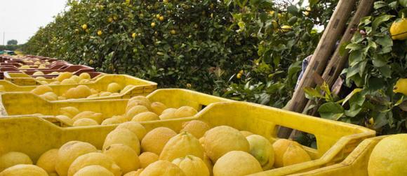 Lega Consumatori Sicilia: agromafie e tutela del cittadino consumatore