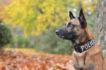 Torino: Il cane poliziotto Evans scova la droga nel doppio fondo di un cassetto
