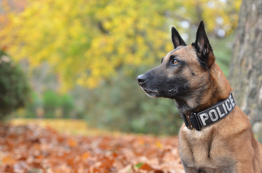 Torino, quelle con il cane non erano solo passeggiate: arrestato pusher