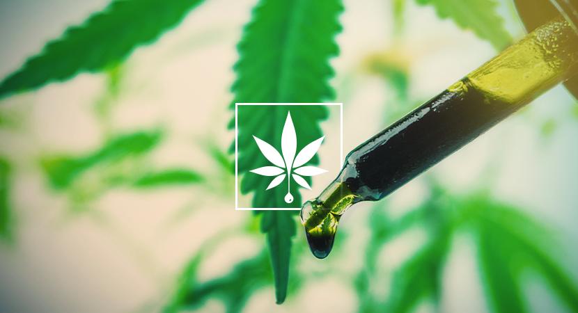 Semi di Cannabis e Olio CBD per incoraggiare l'omeostasi e il benessere