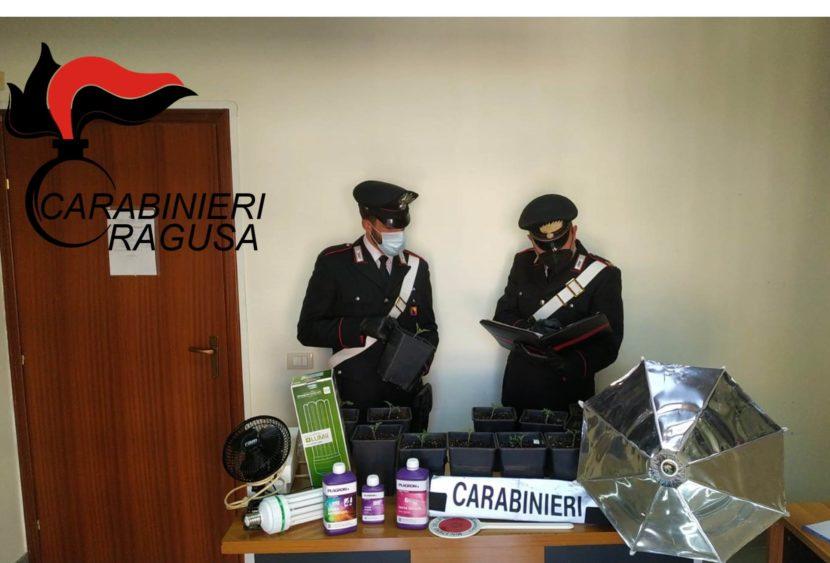 Vittoria: Carabinieri scoprono due serre di marijuana, un arresto