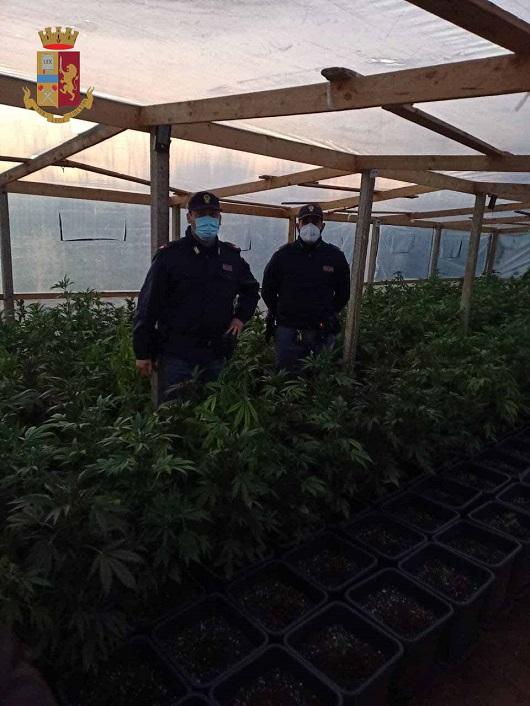 Comiso, serra dedicata alla produzione di marijuana. Arrestato un uomo