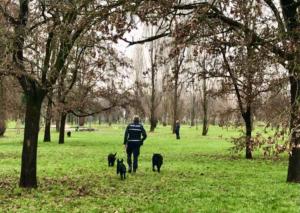 Polizia: oltre 70 cani addestrati dalla scuola del nucleo cinofili