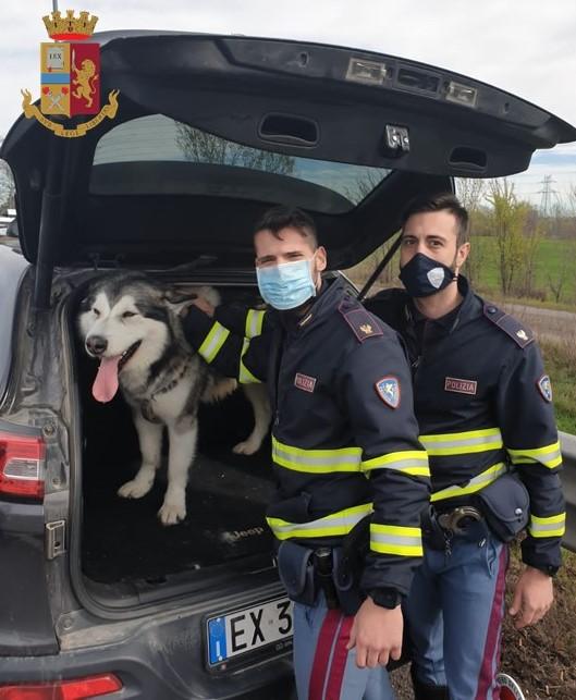 Polizia di Stato porta in salvo un cane in tangenziale