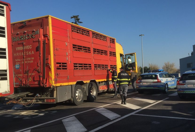 La Polizia stradale tutela il benessere degli animali e del loro trasporto
