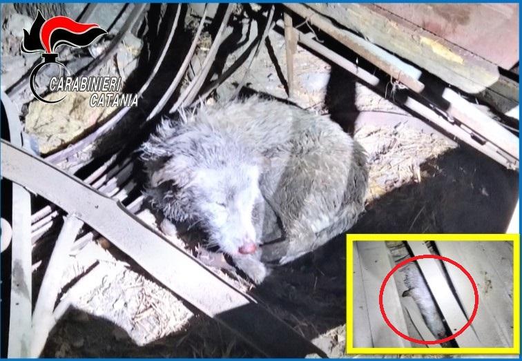 Linguaglossa (CT), Liberati dalla stalla-lager due cani meticci: denunciato il proprietario