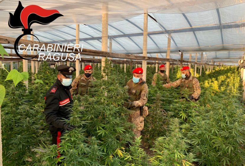 Maxi piantagione di marijuana sequestrata a Vittoria dai Carabinieri