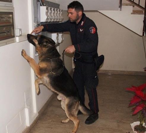 Modica: l'unità cinofila scopre e sequestra diverse quantità di droga