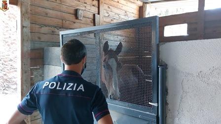 Librino, individuati i responsabili di una corsa clandestina di cavalli