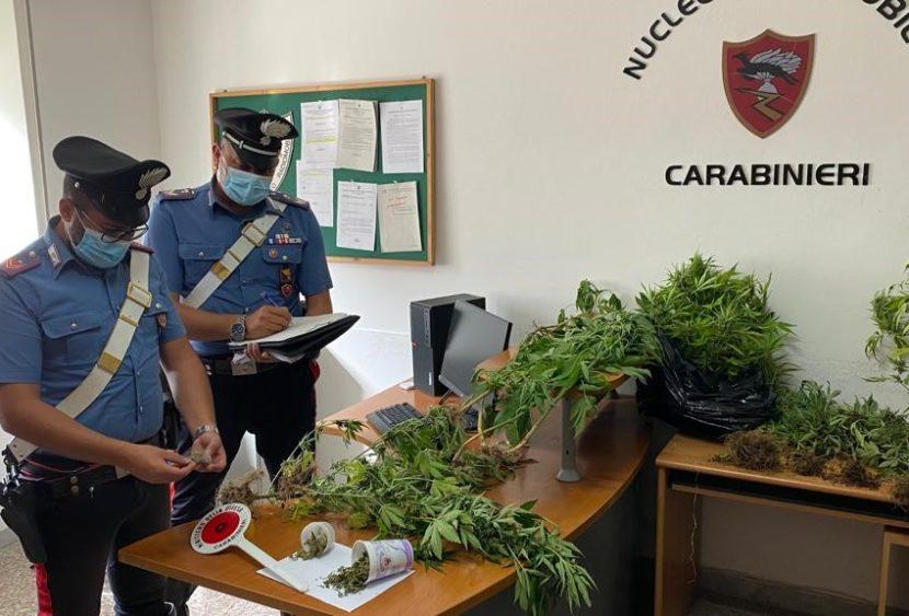 Capo d'Orlando / Naso (ME): coltivava piante di cannabis