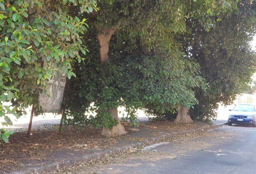 Catania, nel IV municipio richiesta cura del verde