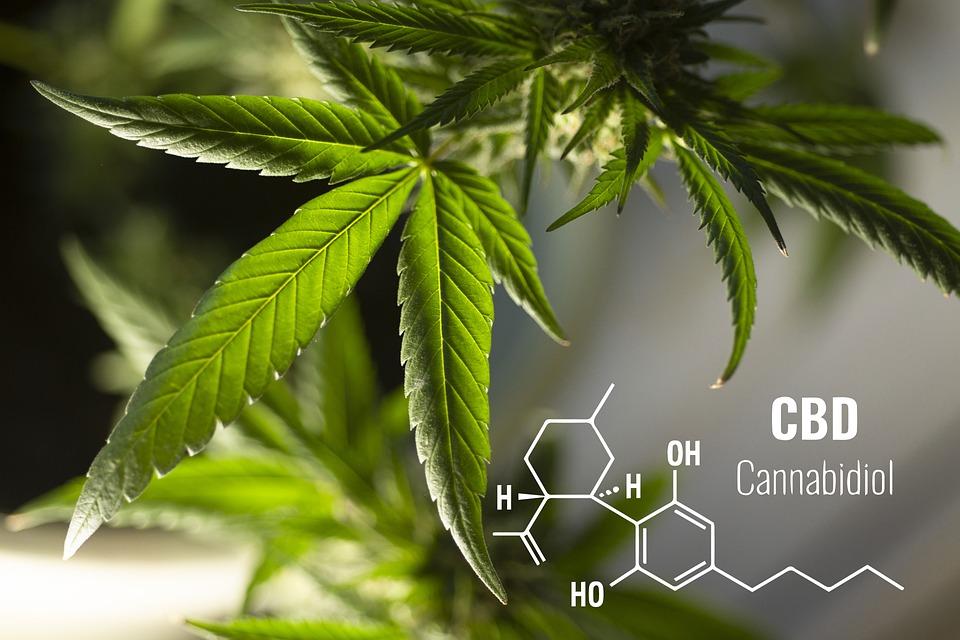 Referendum cannabis: raggiunte le 500.000 firme, prosegue la raccolta delle adesioni per la legalizzazione