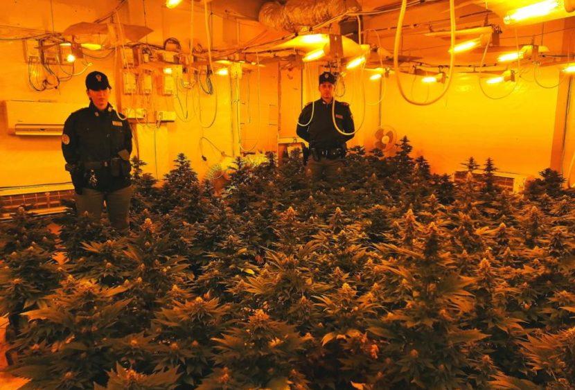 Misilmeri: la Polizia scova piantagione indoor, arrestata una coppia
